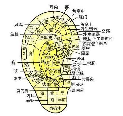 每天摸摸这里, 越摸越长寿 - nongxinsisheng - 栾青山下的个人主页